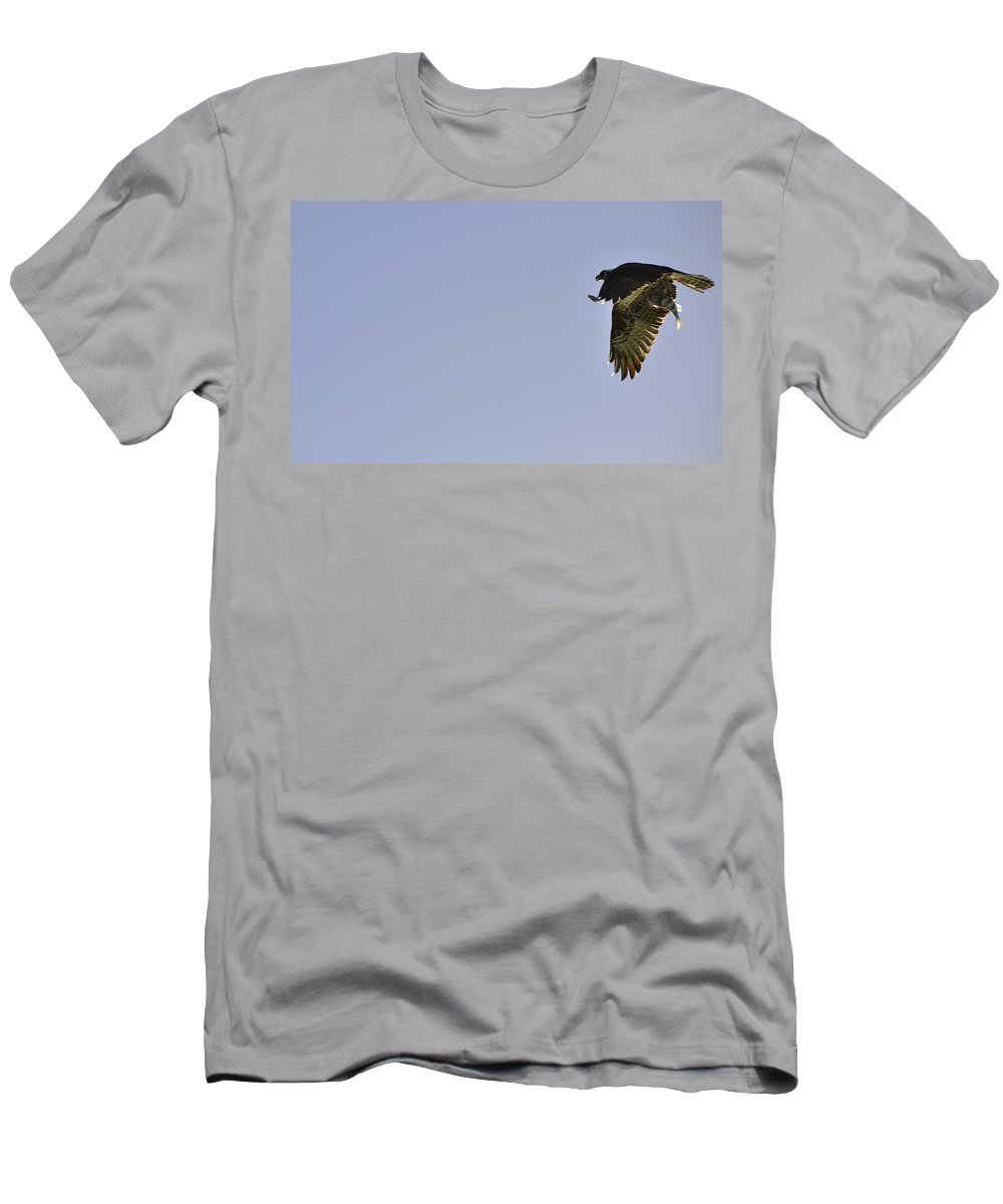Osprey T-Shirt featuring the photograph Osprey Lunch To Go III by Christine Stonebridge