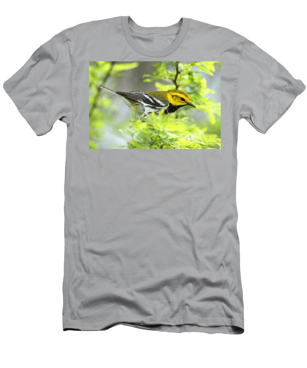Doug Lloyd Men's T-Shirt (Athletic Fit) featuring the photograph Black-throated Green Warbler by Doug Lloyd