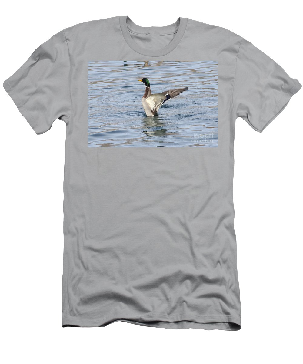 Mallard Men's T-Shirt (Athletic Fit) featuring the photograph Mallard Duck Showing Off by Lori Tordsen