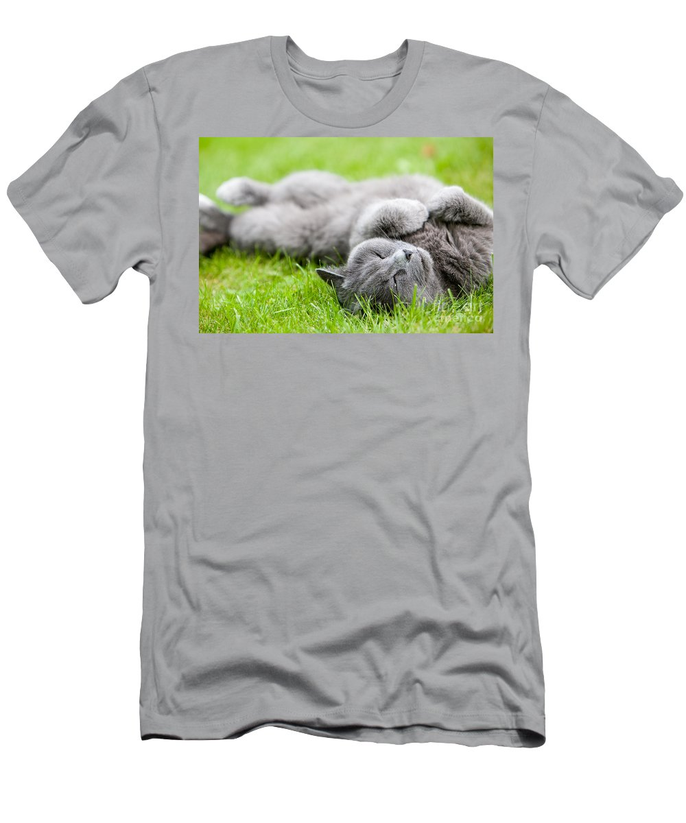 Kamo Men's T-Shirt (Athletic Fit) featuring the photograph Gray Cat by Kati Finell