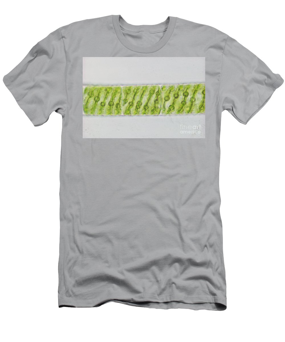 Science Men's T-Shirt (Athletic Fit) featuring the photograph Spirogyra Sp. Algae Lm by M. I. Walker