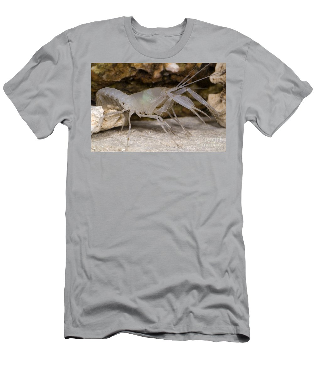 Stygobitic Men's T-Shirt (Athletic Fit) featuring the photograph Mclanes Cave Crayfish by Dante Fenolio