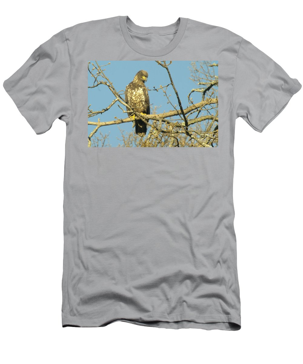 Eagles Men's T-Shirt (Athletic Fit) featuring the photograph A Young Eagle Gazing Down by Jeff Swan