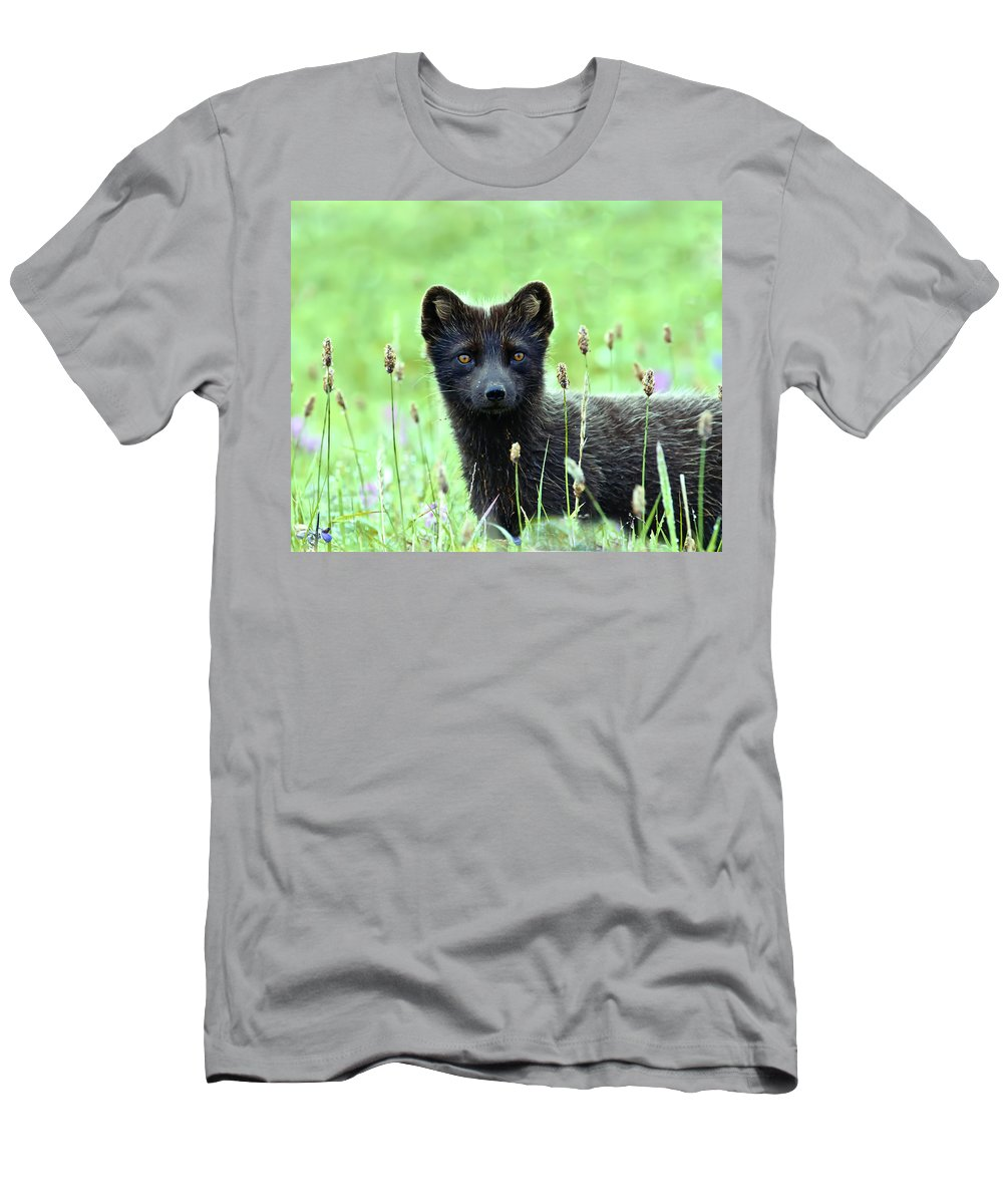 Arctic Fox Men's T-Shirt (Athletic Fit) featuring the photograph Arctic Fox by Kenneth Blye