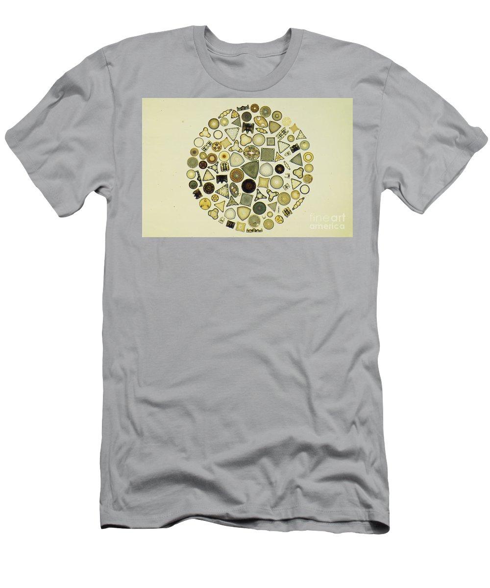 Diatom Men's T-Shirt (Athletic Fit) featuring the photograph Arrangement Of Diatoms by M. I. Walker