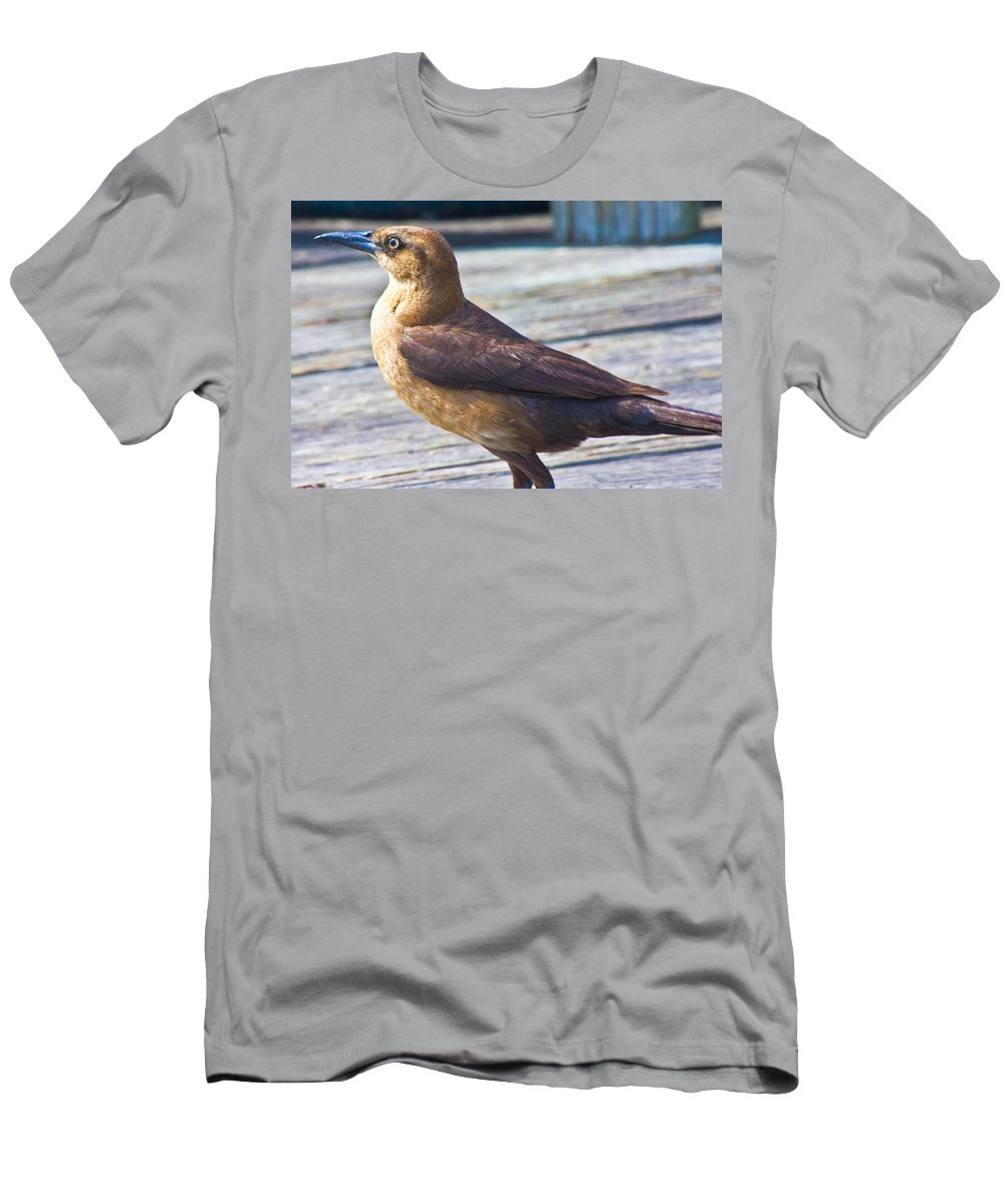 Female Men's T-Shirt (Athletic Fit) featuring the photograph Boat Tail Grackle by Betsy Knapp