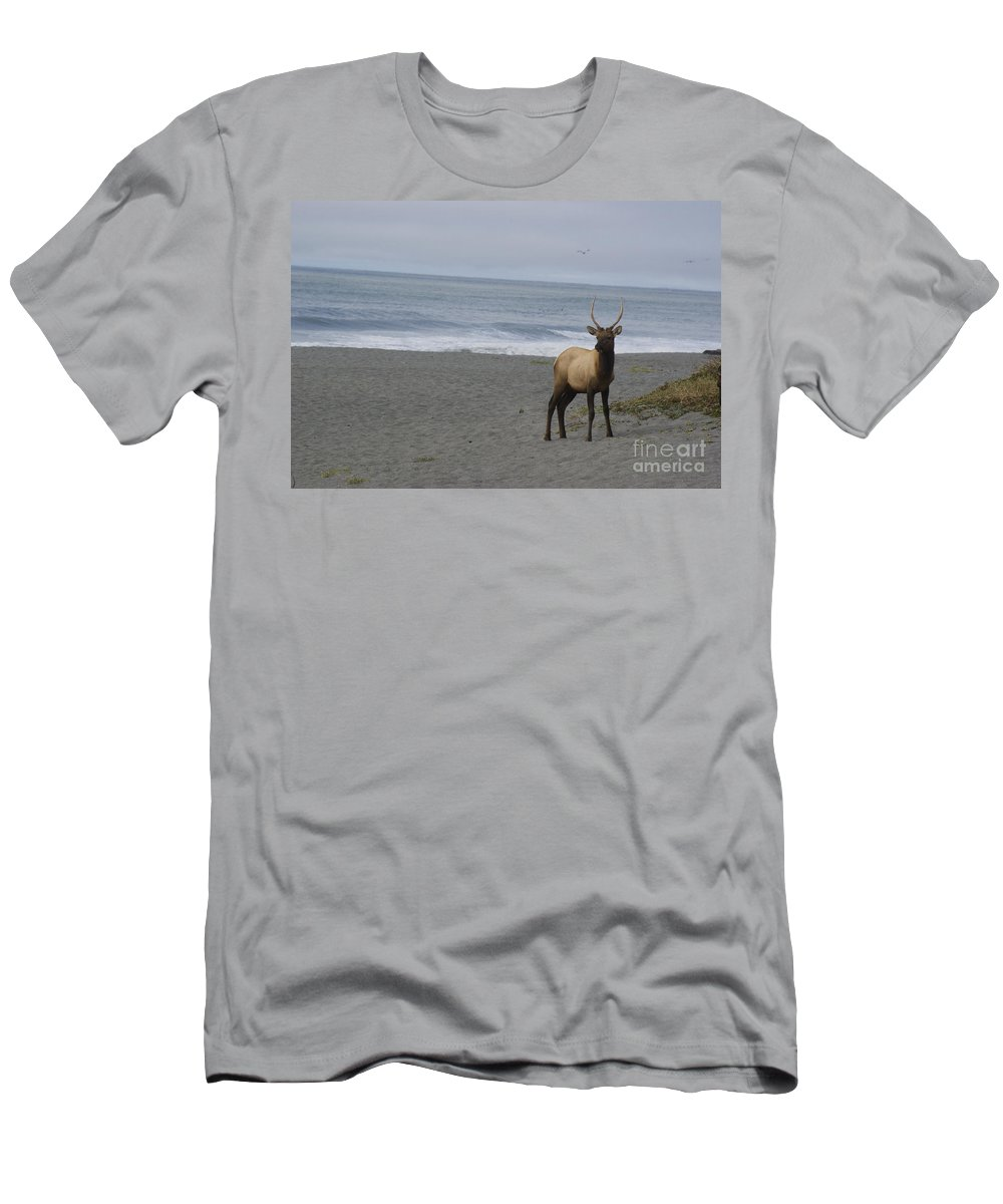 Bull Men's T-Shirt (Athletic Fit) featuring the photograph Bull Elk On Calfornia Coast by Jim And Emily Bush
