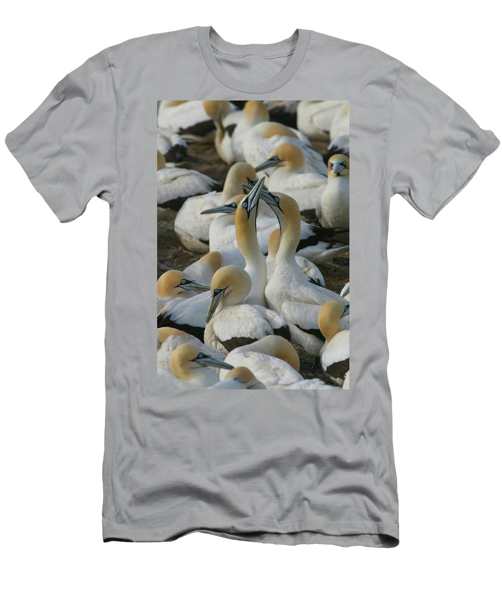Gannet Men's T-Shirt (Athletic Fit) featuring the photograph Cape Gannets by Bruce J Robinson