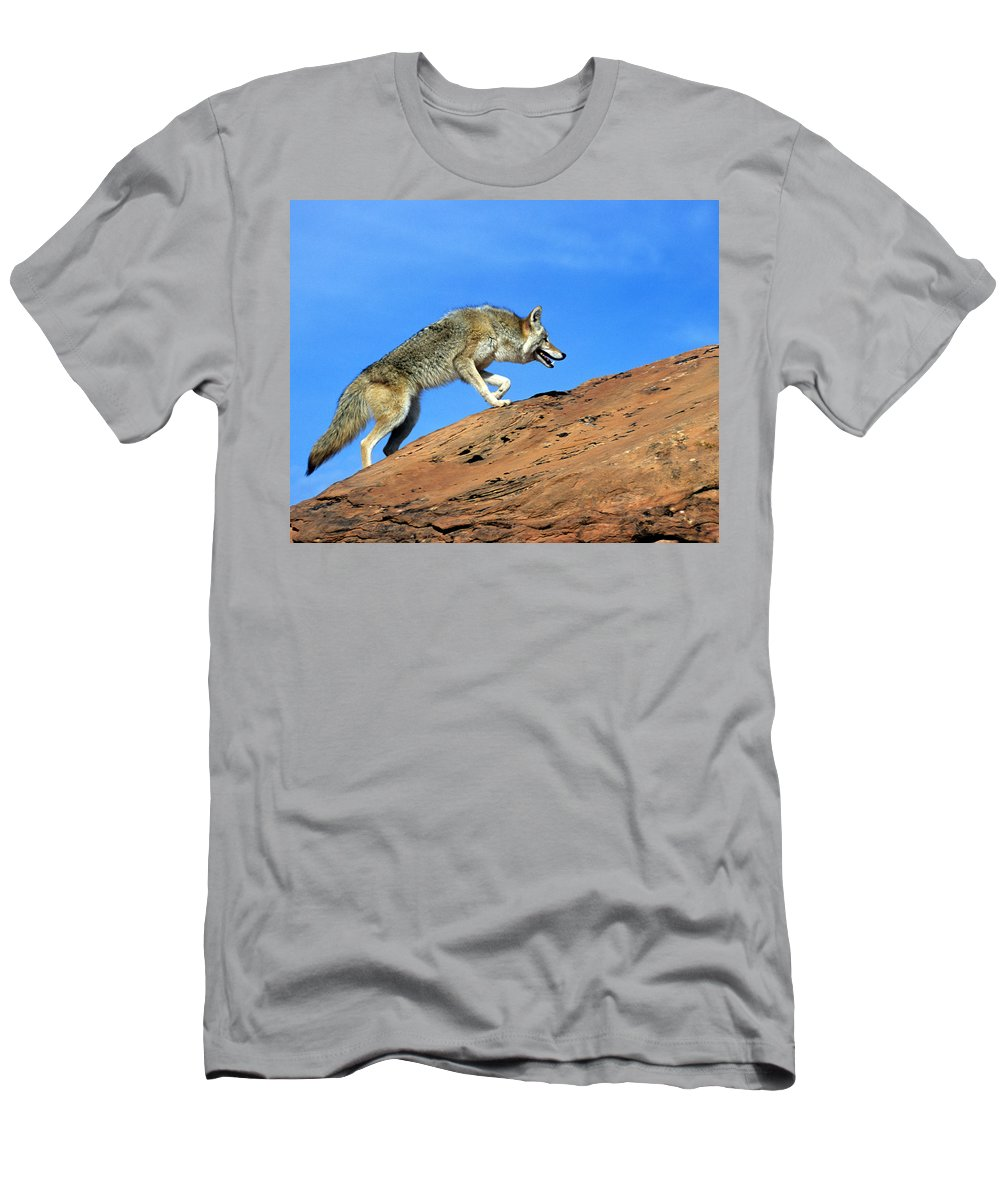 Coyote Men's T-Shirt (Athletic Fit) featuring the photograph Coyote Climbs Mountain by Larry Allan