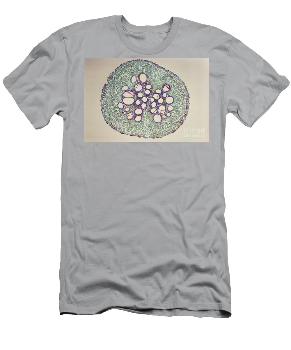 Cucumber Root Men's T-Shirt (Athletic Fit) featuring the photograph Cucumber Root Section by M. I. Walker