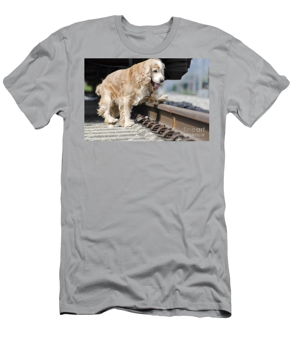 Dog Men's T-Shirt (Athletic Fit) featuring the photograph Dog Walking Over Railroad Tracks by Mats Silvan
