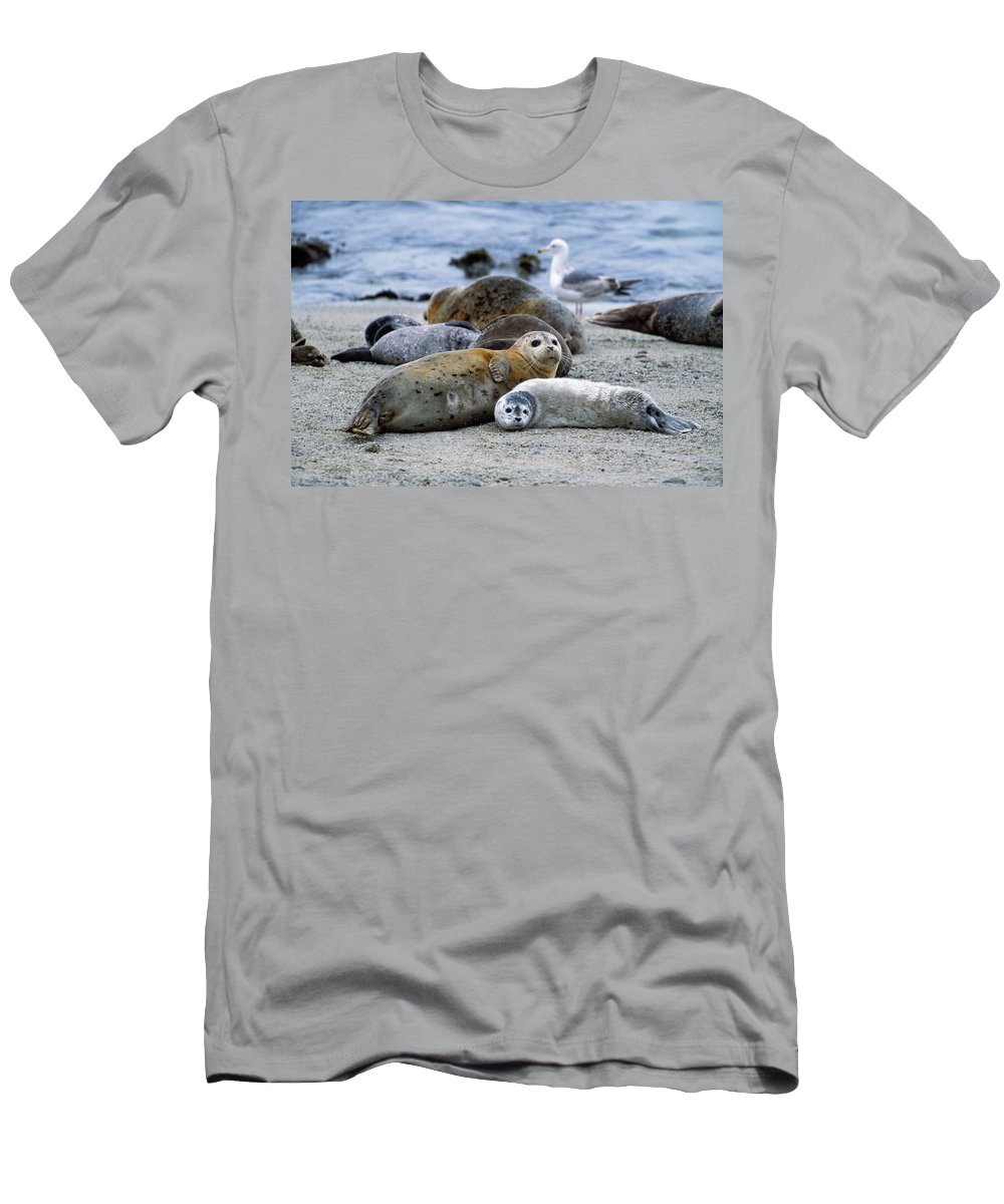 Mp Men's T-Shirt (Athletic Fit) featuring the photograph Harbor Seal Phoca Vitulina Mother by Suzi Eszterhas