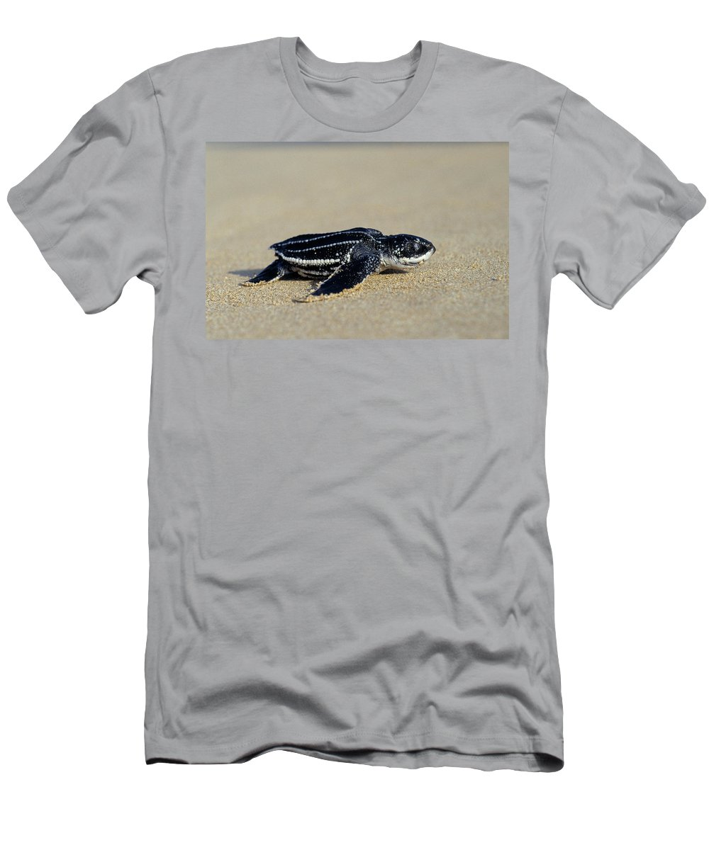 Fn T-Shirt featuring the photograph Leatherback Sea Turtle Dermochelys by Ingo Arndt