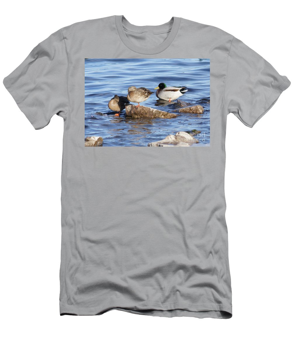 Mallards Men's T-Shirt (Athletic Fit) featuring the photograph Look One Leg by Lori Tordsen