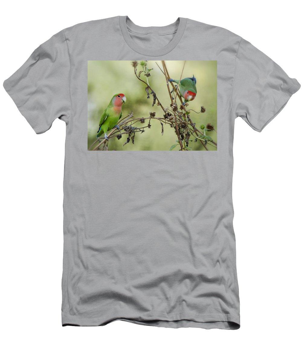 Lovebirds Men's T-Shirt (Athletic Fit) featuring the photograph Lovebirds At Play by Saija Lehtonen