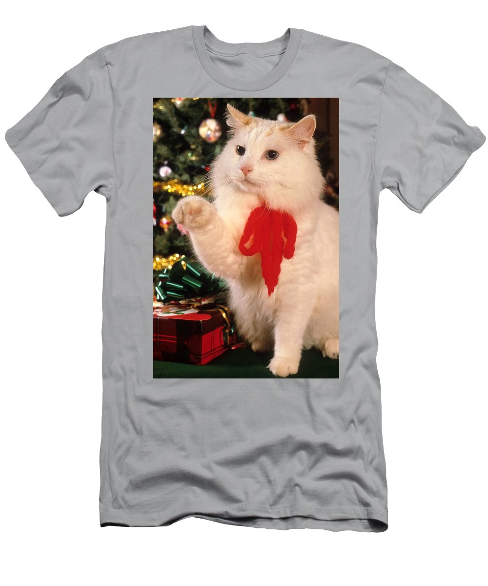 Mixed Breed Men's T-Shirt (Athletic Fit) featuring the photograph Mixed Breed Cat Reaches Out by Larry Allan
