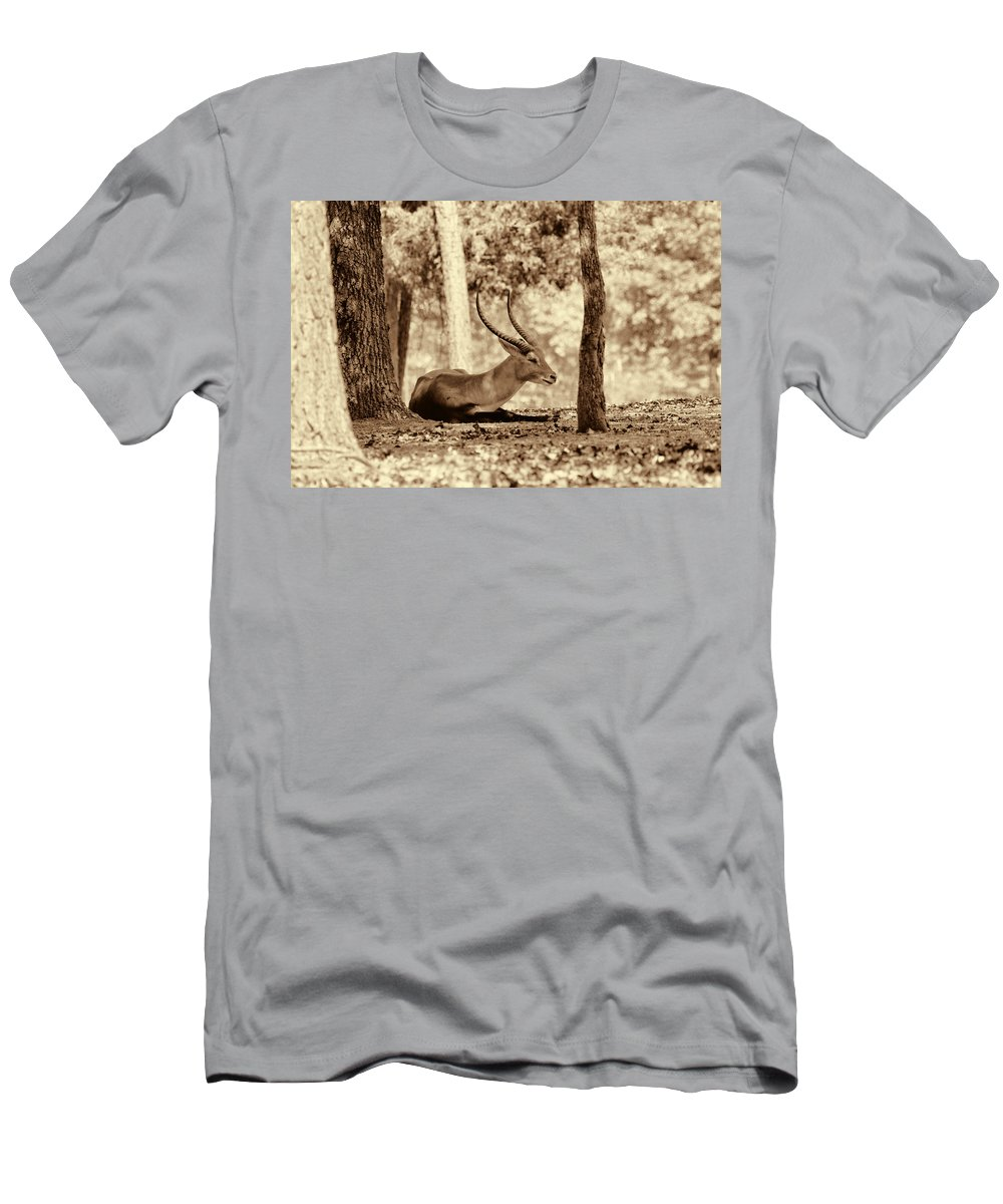 Antelope Men's T-Shirt (Athletic Fit) featuring the photograph Napping by Douglas Barnard