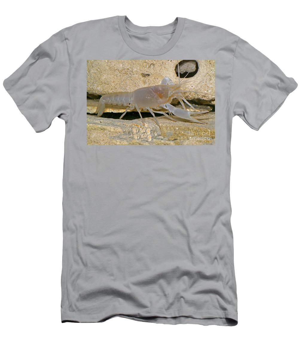 Cave Crayfish Men's T-Shirt (Athletic Fit) featuring the photograph Orange Lake Cave Crayfish by Dante Fenolio