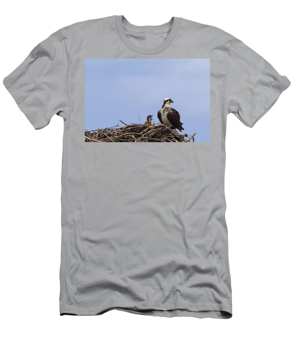 Osprey Men's T-Shirt (Athletic Fit) featuring the photograph Osprey Mother And Chick by Stephanie McDowell