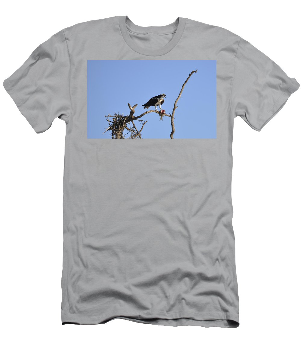 Osprey T-Shirt featuring the photograph Osprey with Catch I by Christine Stonebridge
