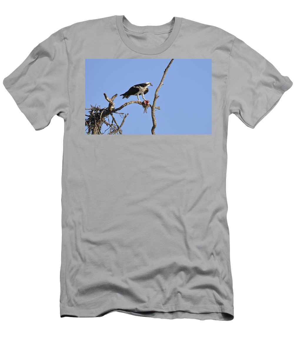 Osprey T-Shirt featuring the photograph Osprey with Catch II by Christine Stonebridge