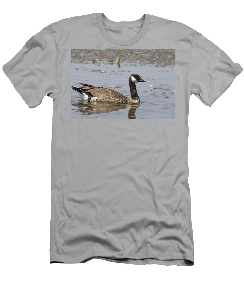 Canadian Goose Men's T-Shirt (Athletic Fit) featuring the photograph Paddling by Douglas Barnard