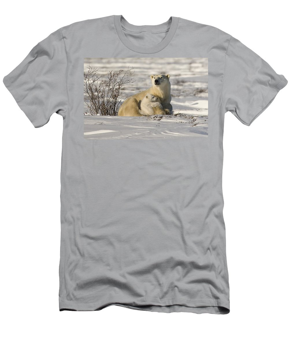 Bear Cub Men's T-Shirt (Athletic Fit) featuring the photograph Polar Bear With Cub, Watchee by Robert Brown