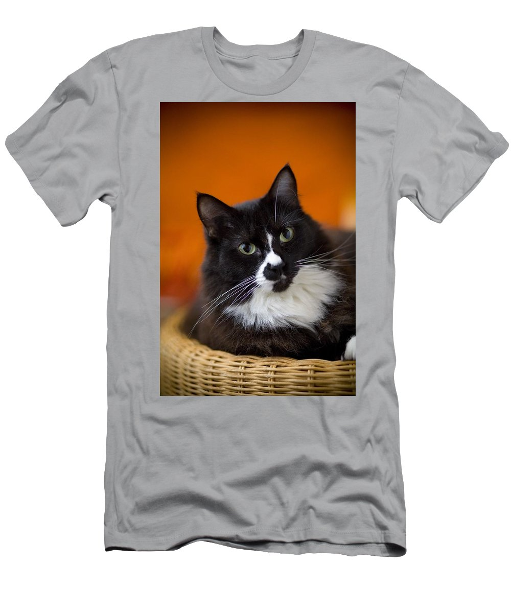 Animals Men's T-Shirt (Athletic Fit) featuring the photograph Portrait Of A Cat by David DuChemin