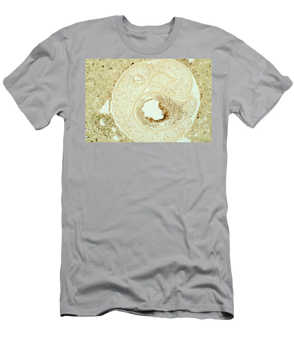 Pathology Men's T-Shirt (Athletic Fit) featuring the photograph Schistosoma Mansoni by M. I. Walker