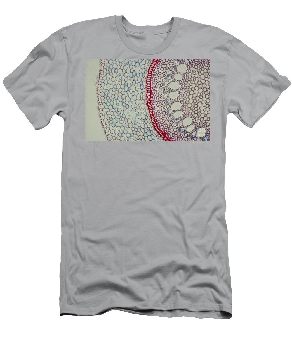 Smilax Men's T-Shirt (Athletic Fit) featuring the photograph Smilax Endodermis by M. I. Walker