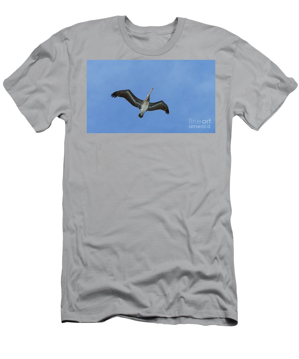 Birds Men's T-Shirt (Athletic Fit) featuring the photograph Soaring Pelican by Randy Harris