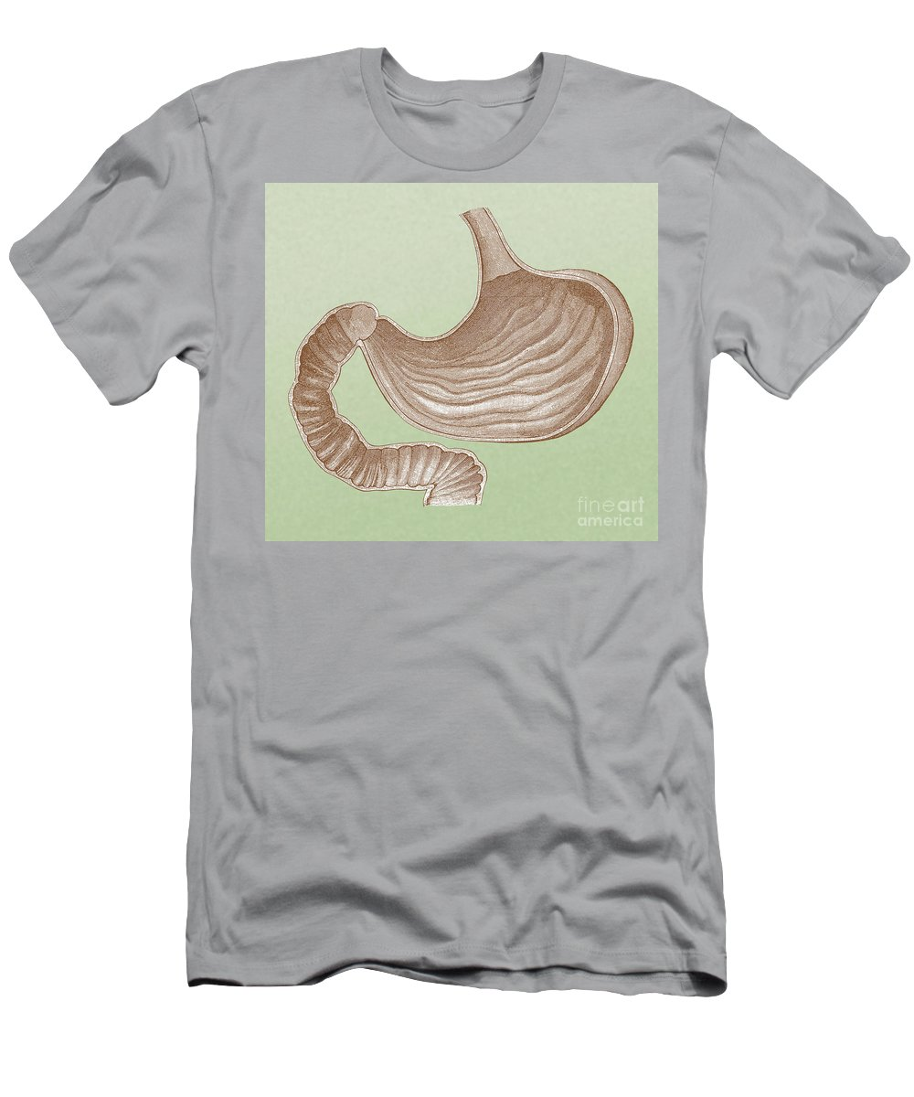 Abdominal Organs T Shirts Fine Art America