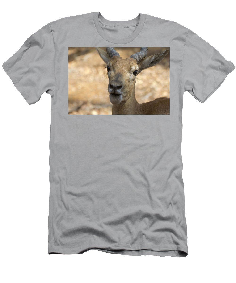 Antelope Men's T-Shirt (Athletic Fit) featuring the photograph Surprise by Douglas Barnard