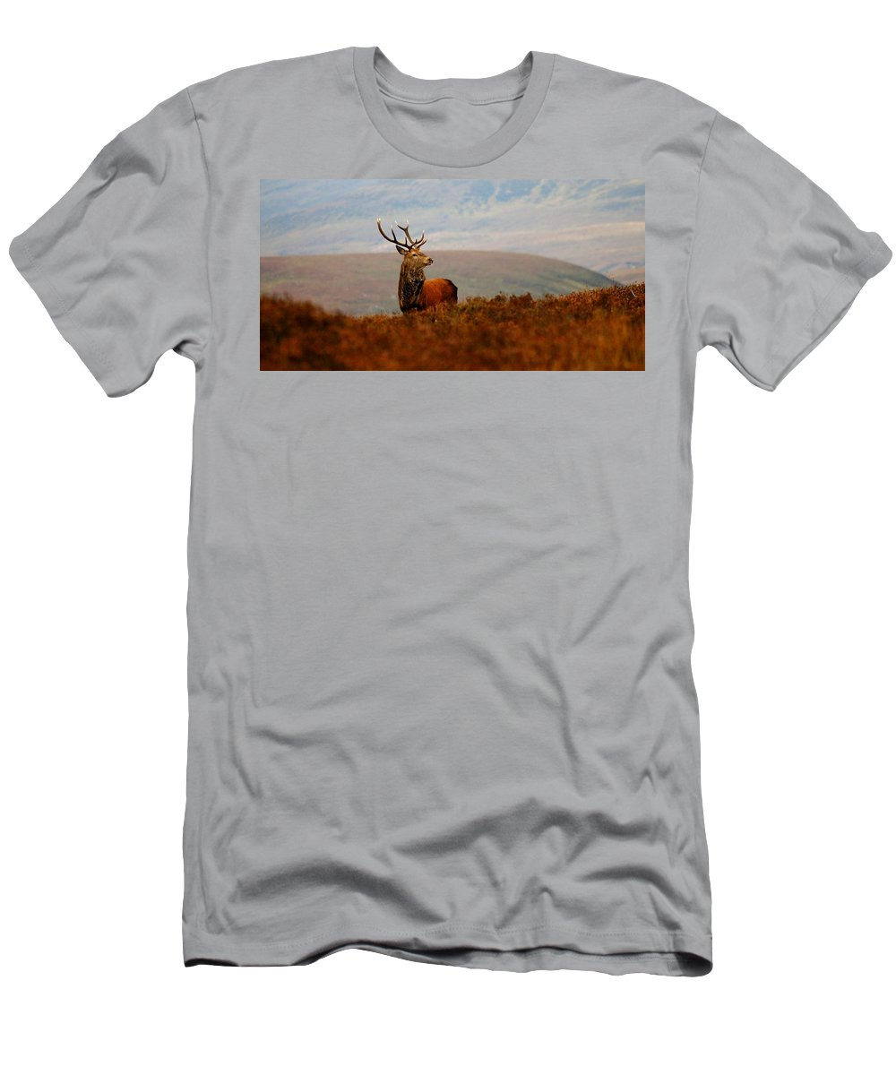 Red Deer Stag Men's T-Shirt (Athletic Fit) featuring the photograph The Monarch by Gavin Macrae