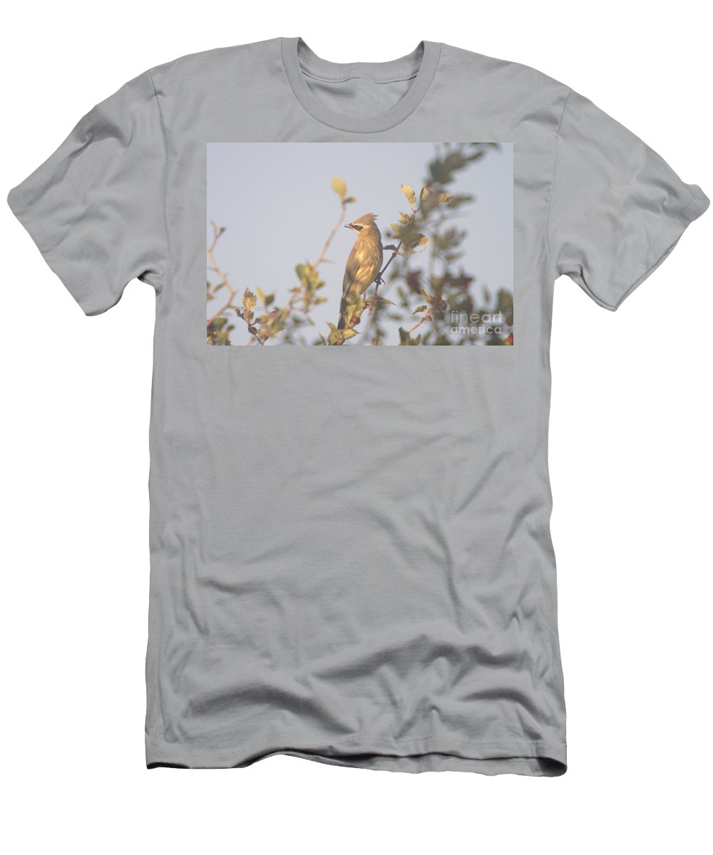 Birds Men's T-Shirt (Athletic Fit) featuring the photograph Wax Wing In Sunshine by Jeff Swan