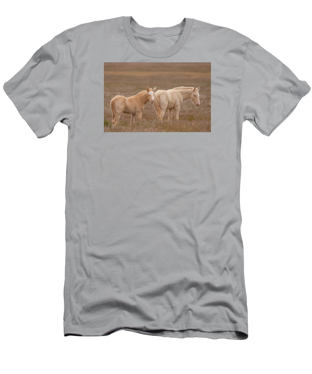Wild Horse Men's T-Shirt (Athletic Fit) featuring the photograph Cremello Brothers by Kent Keller