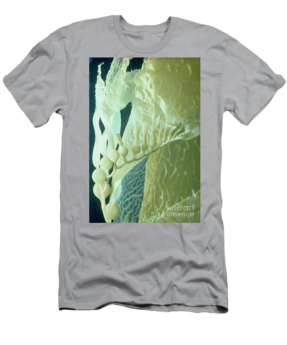 Mp Men's T-Shirt (Athletic Fit) featuring the photograph Giant Kelp Detail by Flip Nicklin