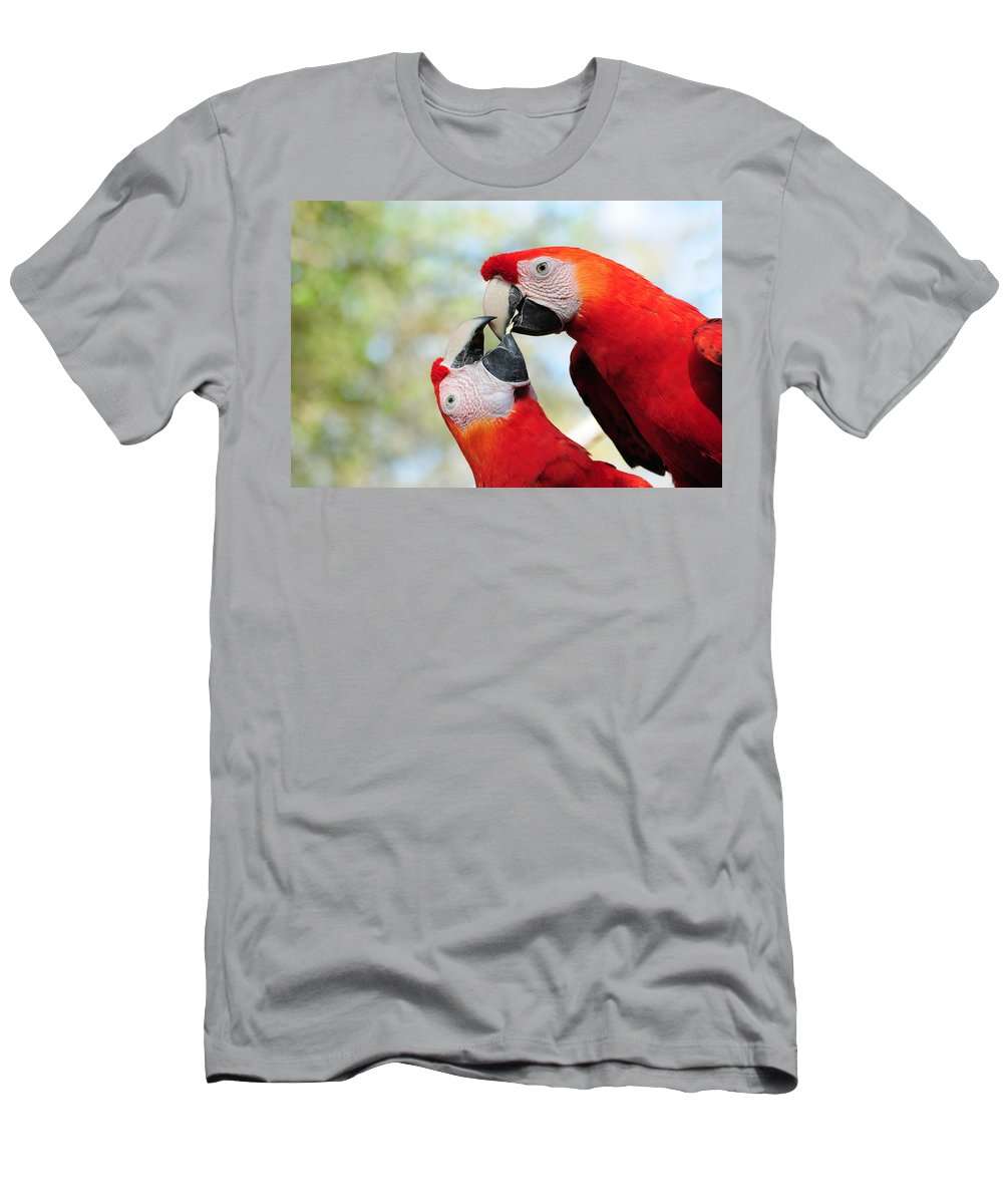 Bird T-Shirt featuring the photograph Macaws by Steven Sparks