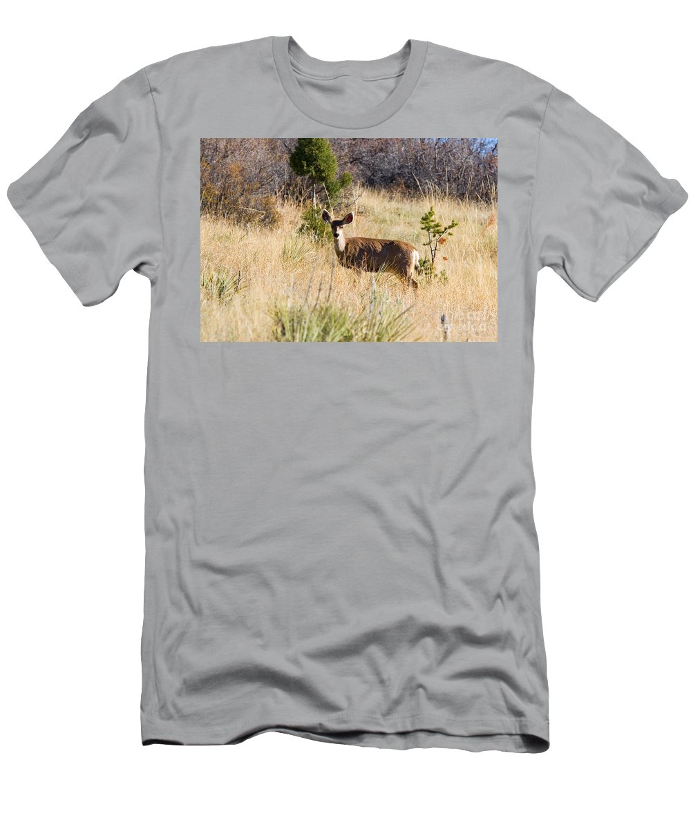 Deer Men's T-Shirt (Athletic Fit) featuring the photograph Mule Deer In Garden Of The Gods by Steve Krull