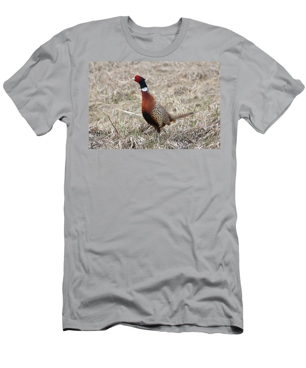 Pheasant Men's T-Shirt (Athletic Fit) featuring the photograph Pheasant Rooster by Lori Tordsen