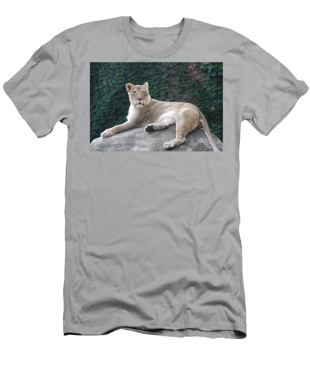 Animals Men's T-Shirt (Athletic Fit) featuring the photograph Zoo Lion by Jose Canales