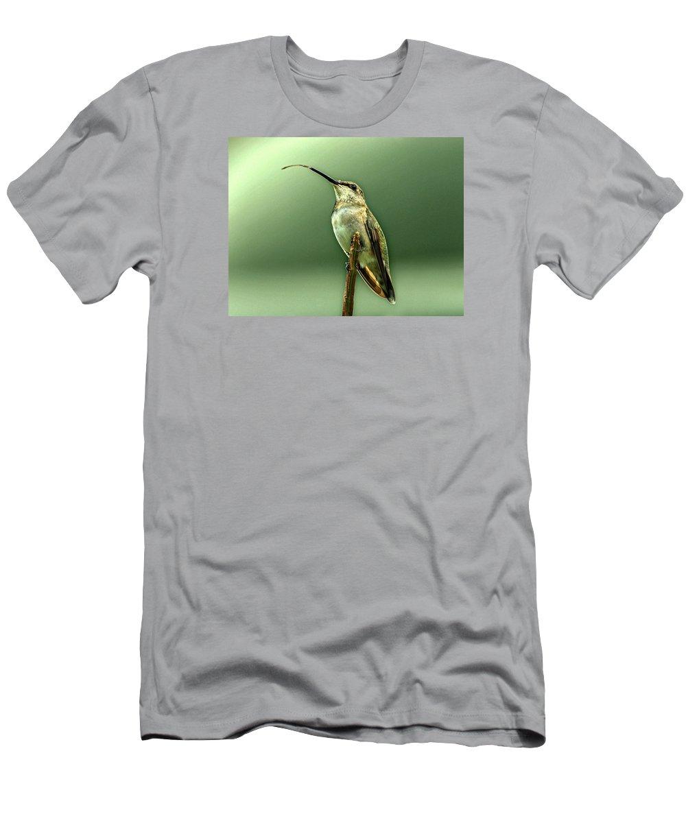 Hummingbird Men's T-Shirt (Athletic Fit) featuring the photograph Hummingbird by Sandy Keeton