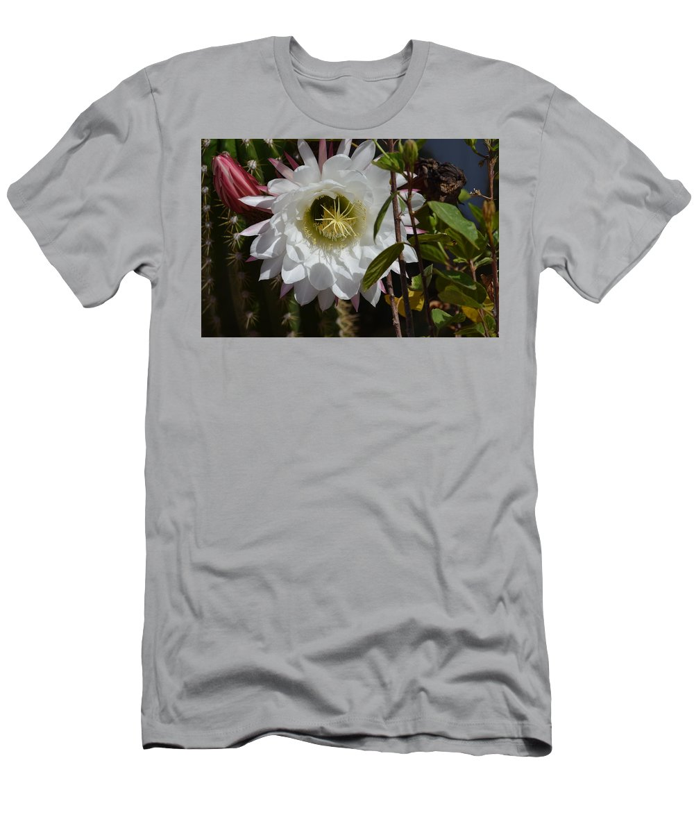 Cactus Men's T-Shirt (Athletic Fit) featuring the photograph Night Bloomers by Diane Barone