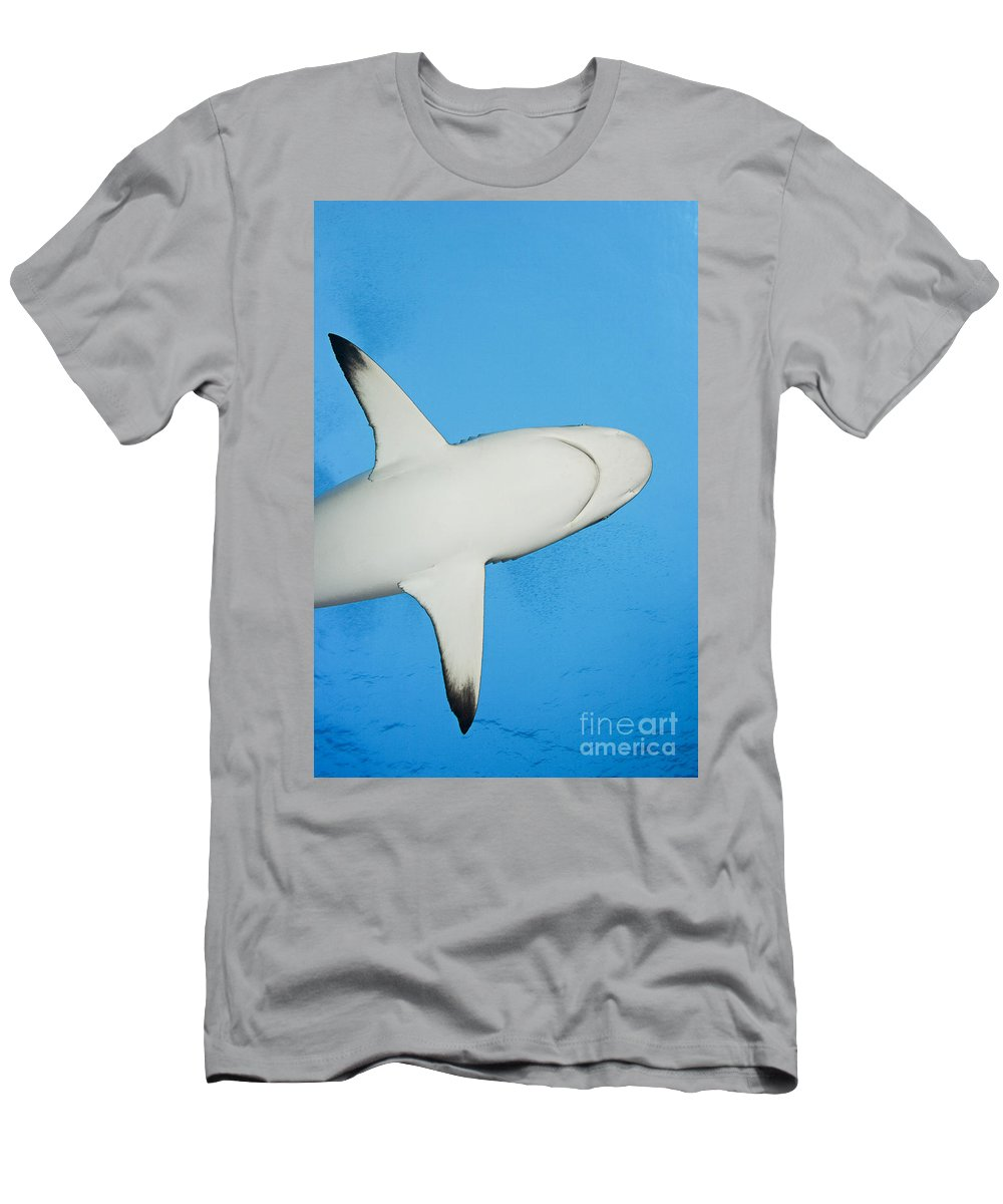 Amblyrhynchos Men's T-Shirt (Athletic Fit) featuring the photograph Grey Reef Shark by Dave Fleetham - Printscapes