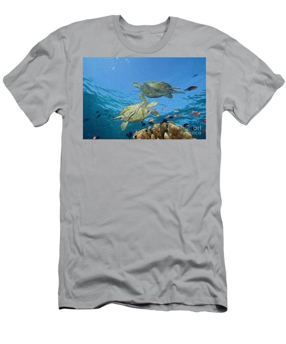 Animal Art Men's T-Shirt (Athletic Fit) featuring the photograph Green Sea Turtle by Dave Fleetham - Printscapes