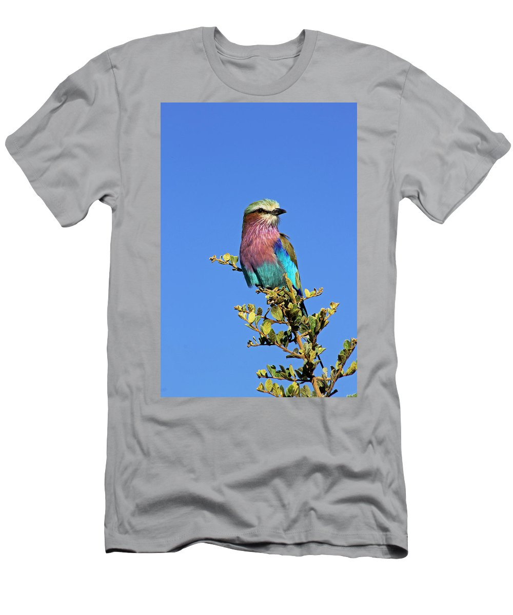 Lilac Breasted Roller Men's T-Shirt (Athletic Fit) featuring the photograph Lilac Breasted Roller by Tony Murtagh