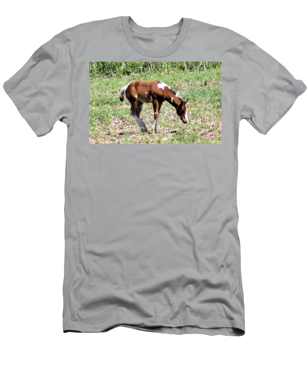 Horses Men's T-Shirt (Athletic Fit) featuring the photograph A Young Painted Colt by Jeff Swan