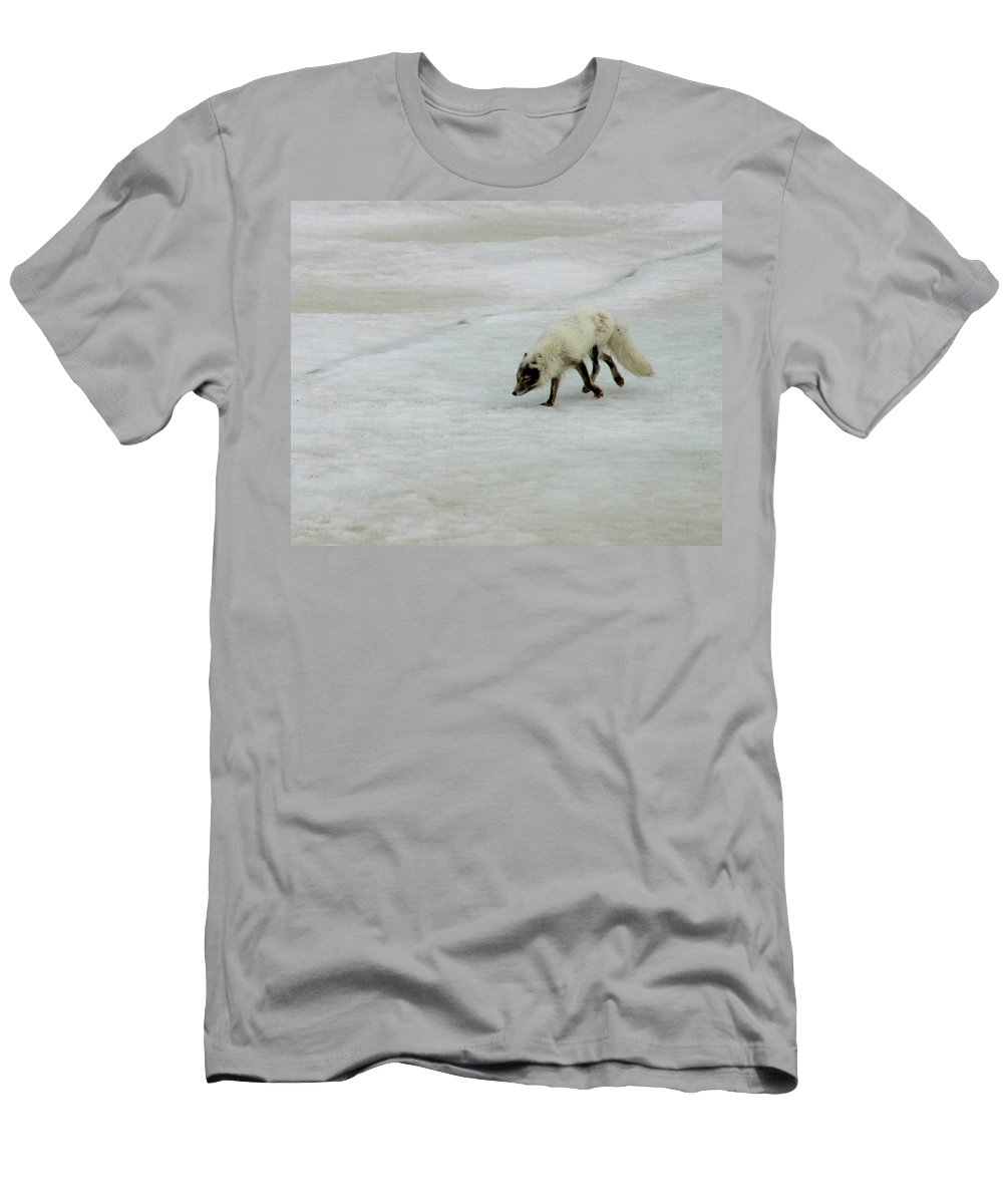 Arctic Fox Men's T-Shirt (Athletic Fit) featuring the photograph Arctic Fox On Ice by Anthony Jones