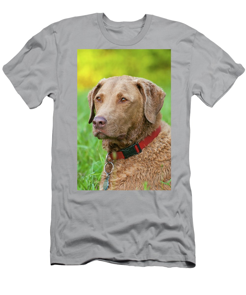 Animals Men's T-Shirt (Athletic Fit) featuring the photograph Bailee 1149 by Guy Whiteley