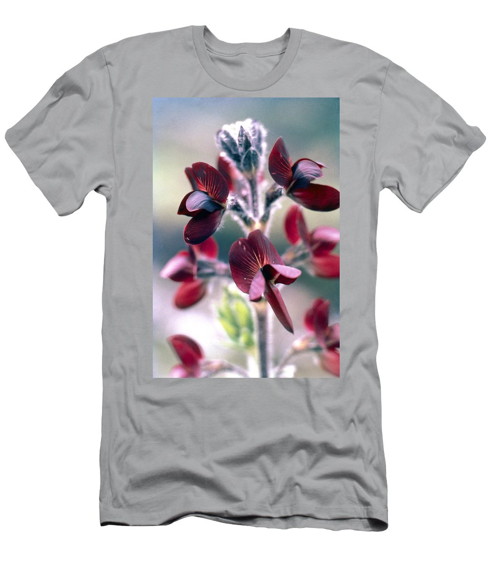 Barbed Thermopsis Men's T-Shirt (Athletic Fit) featuring the photograph Barbed Thermopsis Or Black Pea by American School